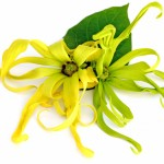 ADD CHANEL NO. 5 TO YOUR LANDSCAPE WITH A YLANG YLANG TREE.