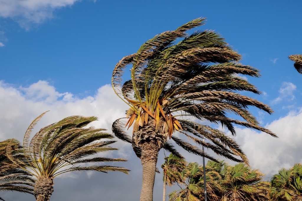 palms in wind