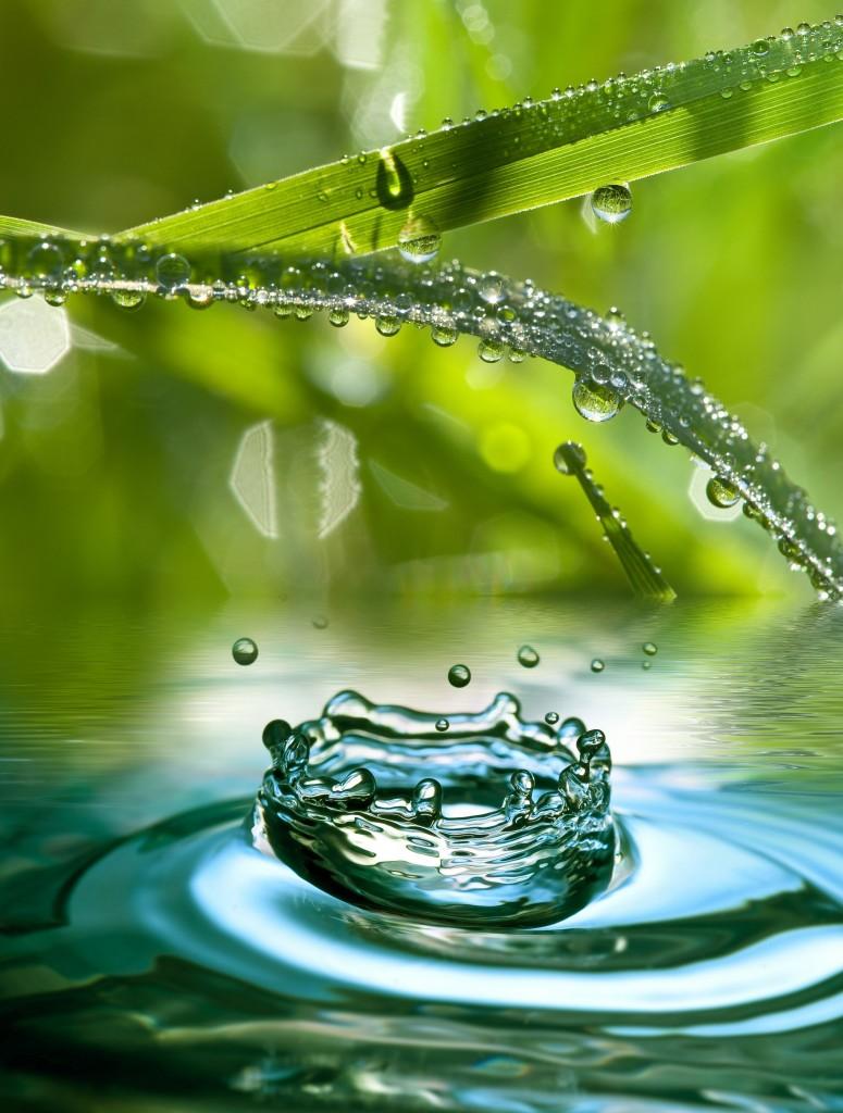 grass and raindrop