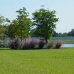 WHY DON'T YOU TAKE A WALK ON THE WILD SIDE? PLANT SOME PINK MUHLY GRASS.