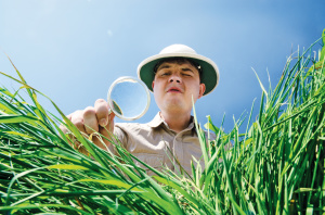 guy inspecting grass with magnifying glass