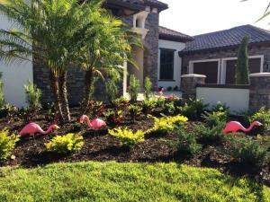 Flamingos in yard