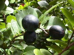 CP fruit