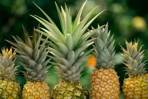 pineapple_42706555