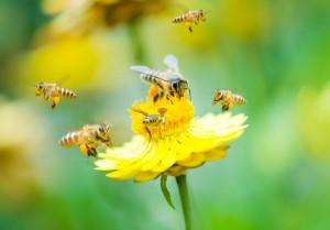 Bees Enjoying a Pollen Lunch - ArtisTree