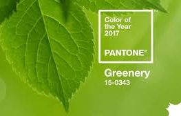 PANTONE'S COLOR OF THE YEAR GETS A GREEN THUMBS UP FOR FLORIDA LANDSCAPES