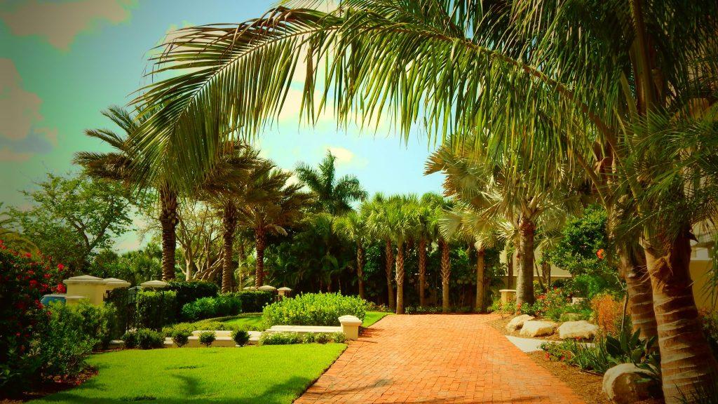 Landscape palms