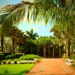 Use a Variety of Palms to Spice Up Your Florida Landscape