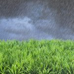 Waterlogged Lawns: Should You Mow or Not