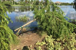 Don't Give Up on Trees Overturned by Irma