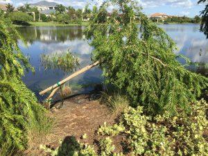 Trees Overturned