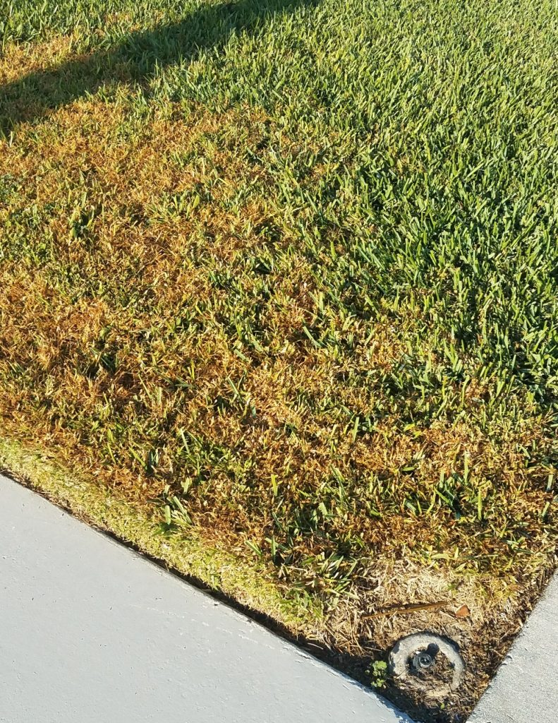 stressed grass