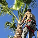 Southwest Florida Palms: Keep Those Fronds On!