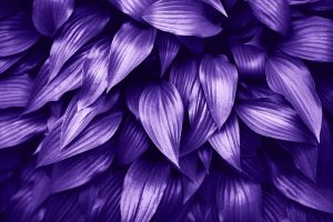 Pantone Ultra Violet 2018 Color of the Year