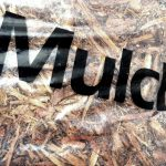 Spring Mulch in SW Florida: Which Choice Should You Settle For?
