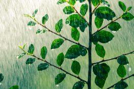 Sarasota Water-Loving Plants