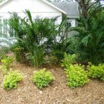 Gold Mound a Brilliant Choice for Southwest Florida Landscapes