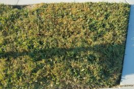 Carpetgrass and Bermuda Grass Intrusion Caused by Florida Cold Weather