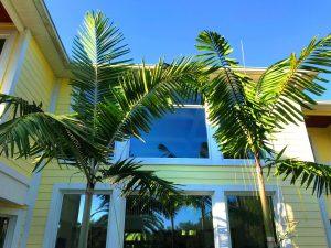 Montgomery palms
