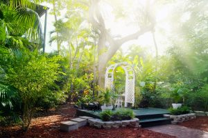 Florida-style landscape