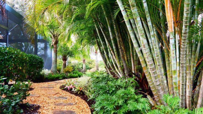 ArtisTree Landscape Design areca palms