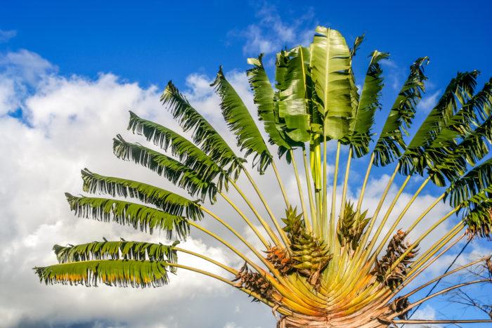 Florida Travelers Palms