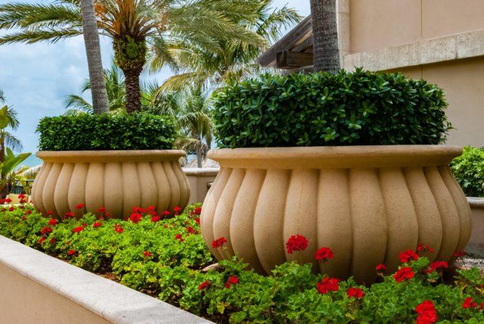 Florida geraniums